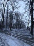 Строки чуть-чуть деревьев и дороги стоковое изображение