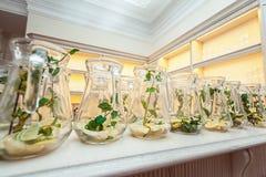 Строки carafe воды mojito-стиля с известкой, лимоном и мятой Чистая еда, диета Стоковые Изображения RF