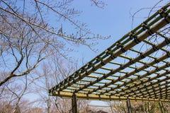 Строящ и традиционного сада популярного с бамбуковыми структурами для того чтобы украсить стоковое изображение rf