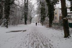 строя классические колонки паркуют зиму st petersburg России peterhof Стоковые Фотографии RF