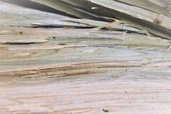 Структура дерева разделения Стоковое Фото