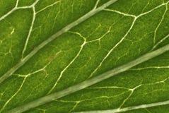 Структура листьев Стоковое фото RF