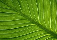 Структура листьев Стоковое Фото