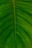 Структура листьев Стоковые Фотографии RF