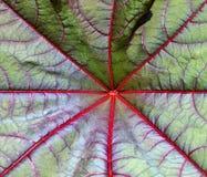 Структура лист при лучи приходя вне от центра Стоковое Изображение