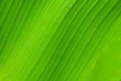 структура листа ладони Стоковое Фото