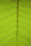 структура листа Стоковое Фото