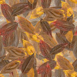 структура листьев осени безшовная Стоковое Изображение RF