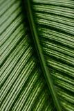 структура листьев Стоковое Изображение RF