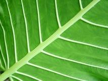 структура листьев Стоковая Фотография