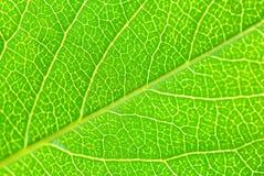 структура листьев Стоковые Изображения