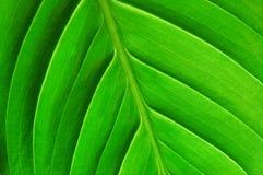 структура листьев Стоковое Изображение