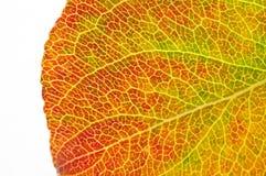 структура макроса листьев осени Стоковое Изображение RF