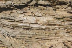 Структура повреждений древесины Стоковая Фотография RF