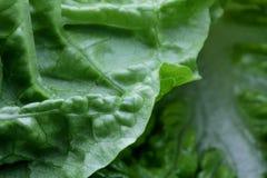 Структура предпосылки витаминов макроса veggie салата Vegetable стоковые изображения rf