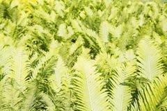 Структура предпосылки зеленых листьев Стоковые Фото