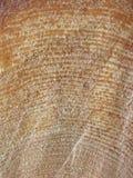 структура сосенки Стоковые Изображения RF