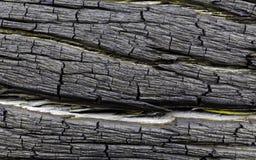Структура старого хобота сосны Стоковые Фото