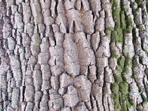 Структура дуба расшивы на яркий день Стоковое фото RF