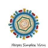 Структура частицы вируса простого герпеса Стоковое фото RF