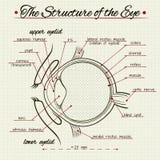 Структура человеческого глаза Стоковые Фото