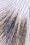 Структура Стоковые Фотографии RF
