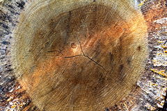Структура cutted дерева Стоковые Изображения RF