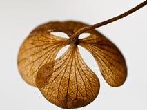 структуры листьев Стоковое Изображение