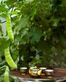 стручки гороха парника служили чай Стоковое Фото