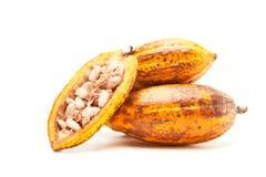 Стручки какао на белизне Стоковая Фотография RF