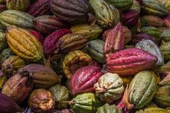 стручки какао стоковые фото