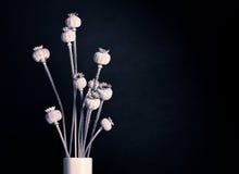 Стручки макового семенени Стоковое Фото