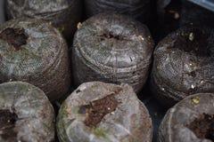 Стручки семени грязи Стоковая Фотография RF