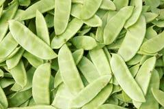 стручки haricot фасоли Стоковая Фотография RF