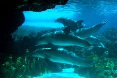 стручок дельфинов стоковое фото
