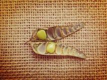 Стручок и семена poinciana карлика Стоковое Фото