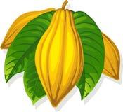Стручок какао и лист - иллюстрация вектора Стоковое Изображение