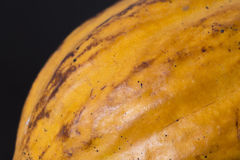 Стручок какао крупного плана Стоковое фото RF