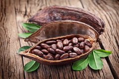 Стручок какао Стоковая Фотография RF