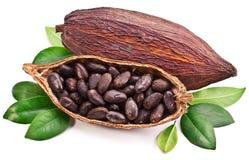 Стручок какао стоковые изображения
