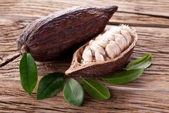 Стручок какао стоковое изображение rf