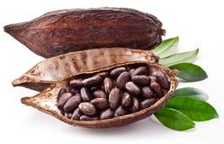 Стручок какао стоковое фото rf