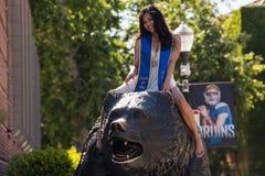 Студент-выпускник UCLA на медведе Топтыгина Стоковое Изображение