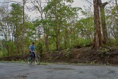 Студент на велосипеде в дороге леса dandeli стоковые фото