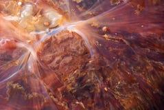 студень рыб детали стоковая фотография rf
