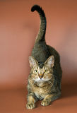 студия кота Стоковые Изображения