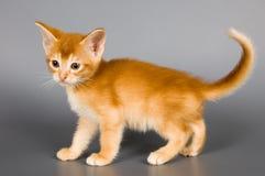 студия котенка стоковая фотография rf