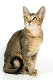 студия котенка Стоковые Фото