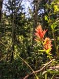 Студия леса Стоковое фото RF