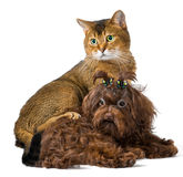 студия щенка кота Стоковое Изображение
